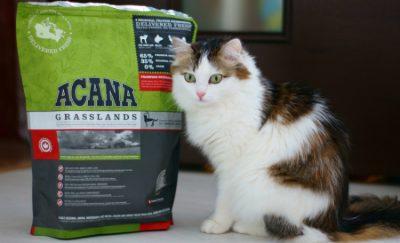 Лучший корм для кошек, по мнению ветеринаров