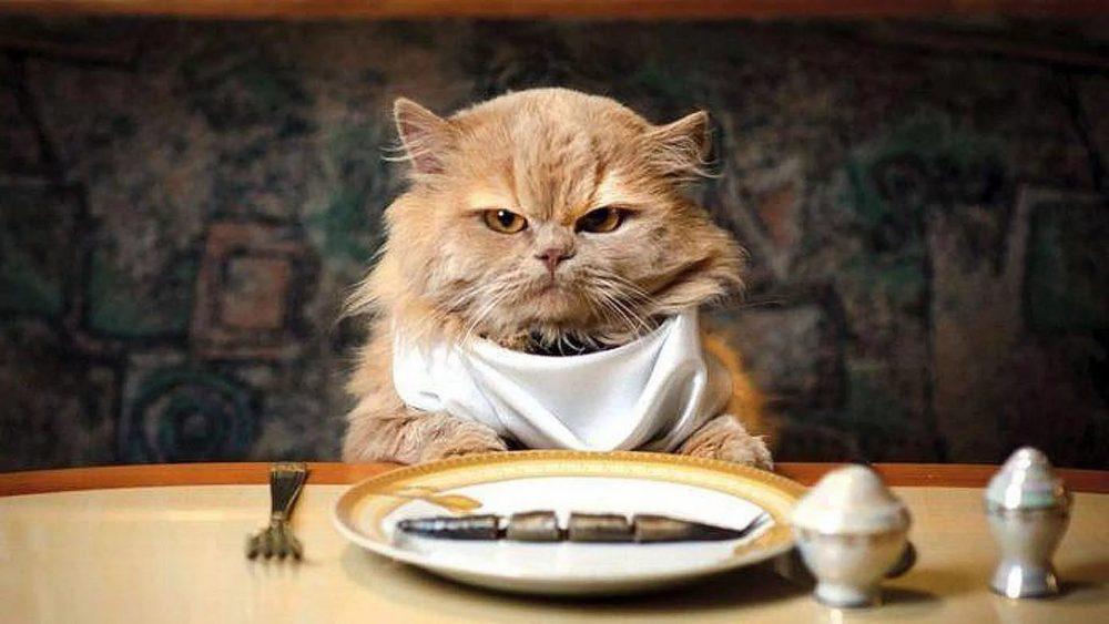 Сколько кошка может прожить без еды и воды