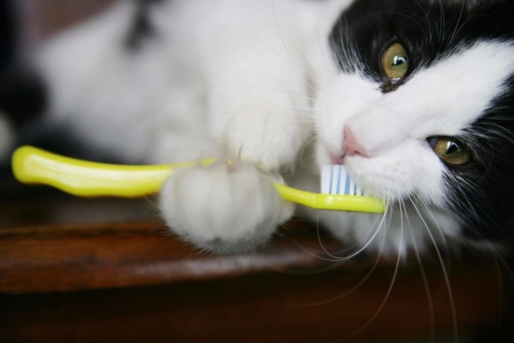 Как выбрать зубную пасту для кошек