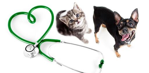 Если заболел домашний любимец: ветеринарная помощь