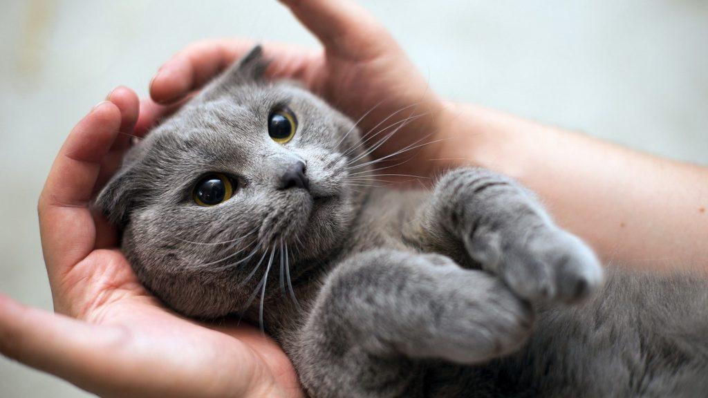 Кому отдать котят или взрослую кошку