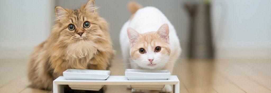 Какой корм выбрать для кошки?