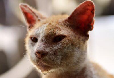 Болезнь глаз у кошек. Как распознать?
