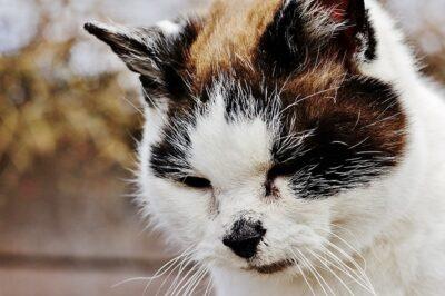 Собираем кошку к ветеринарному врачу