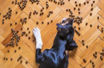 Где заказать качественные корма для домашних животных с доставкой?