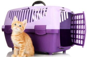 какая переноска для кошек нужна в самолет