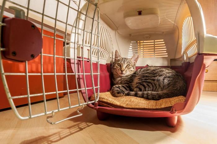 переноска для кошек в самолет требования
