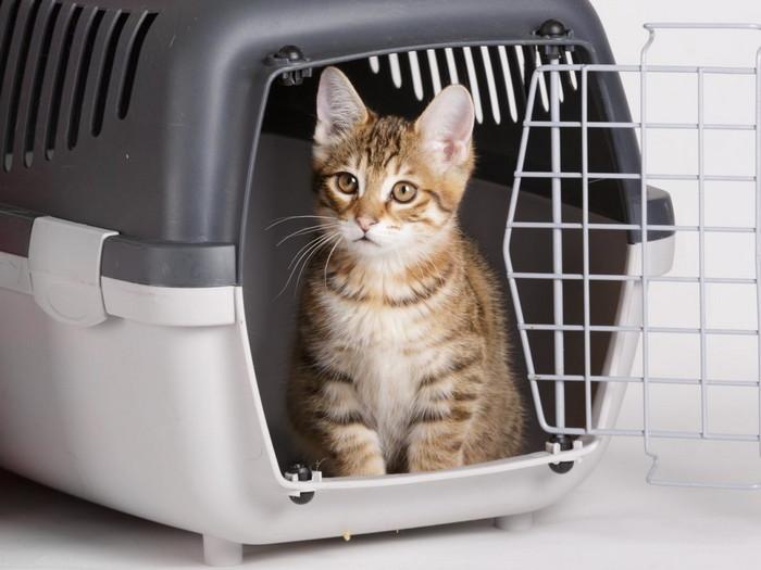 кот в преноске с дверцей