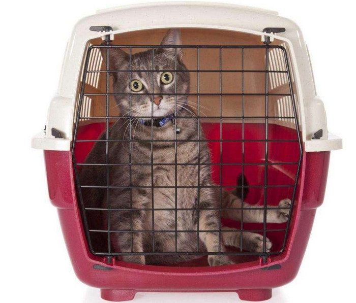 перевозка котов в самолете