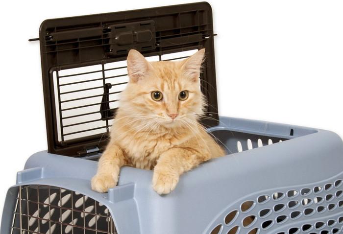 переноски для кошек для полетов