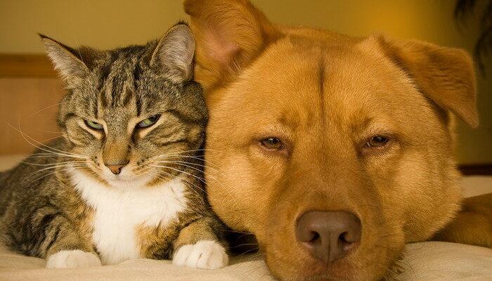 какие породы собак уживаются с кошками