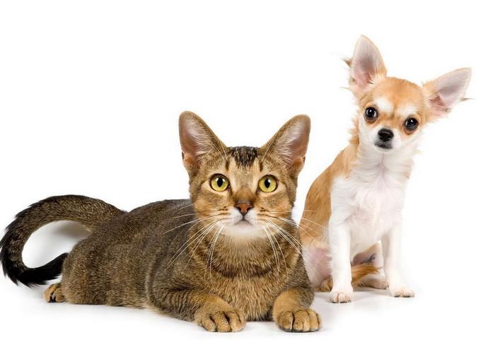 собаки которые дружат с кошками