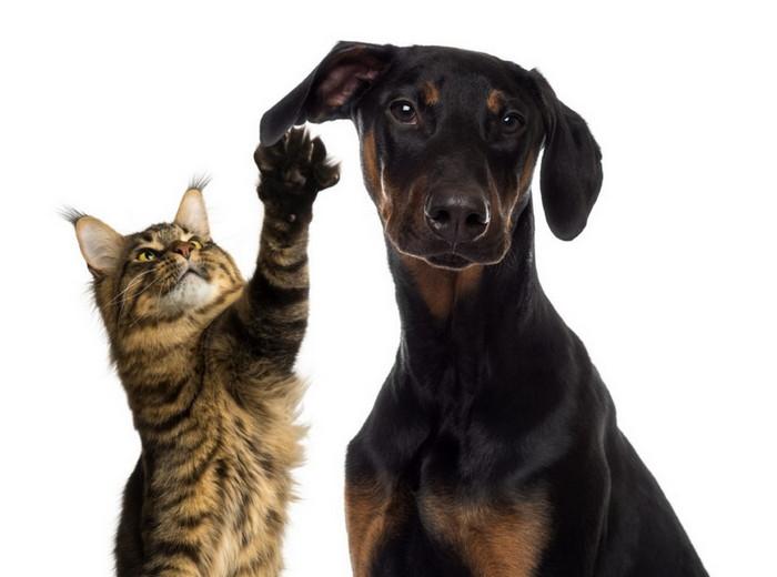 кот и собака в одном доме