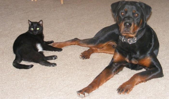 собаки не уживающиеся с кошками
