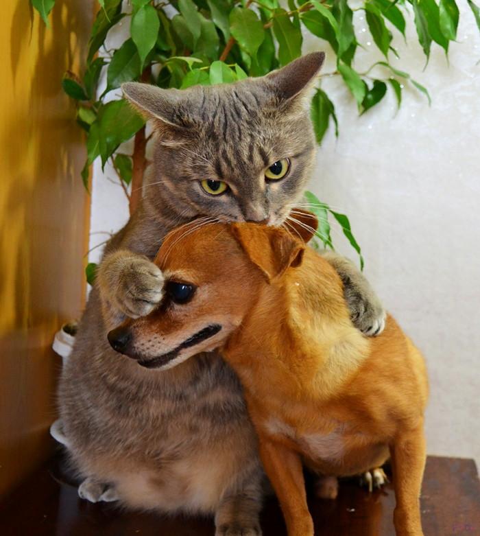 кот и собака ладят