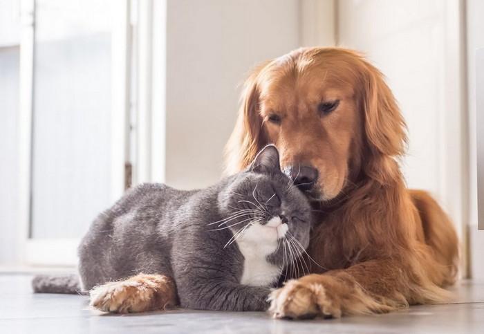 кот и собака живут в мире