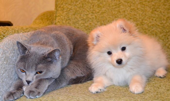 какие собаки ладят с кошками