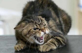 проявление стресса у кошек