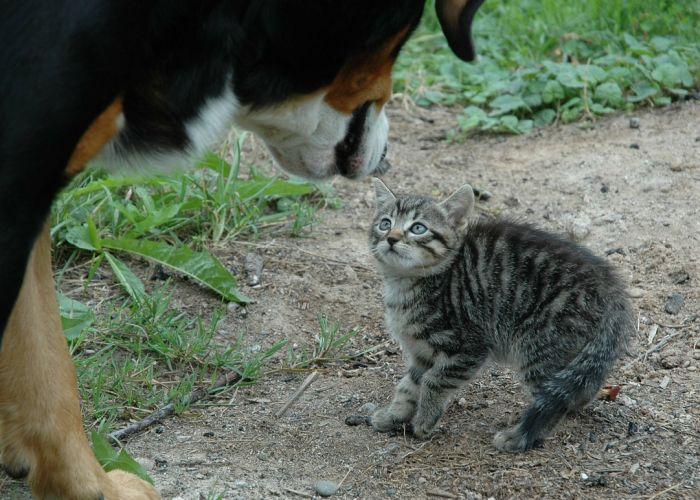 стресс у кошки после собаки что делать
