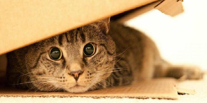 стресс у кошки как распознать