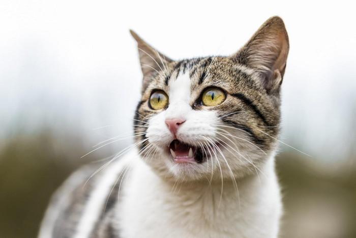 признаки стресса у кошек