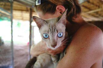 Как предотвратить болезни домашних животных