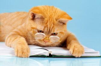 самый умный кот в мире