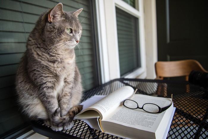 умный кот мифы и реальность