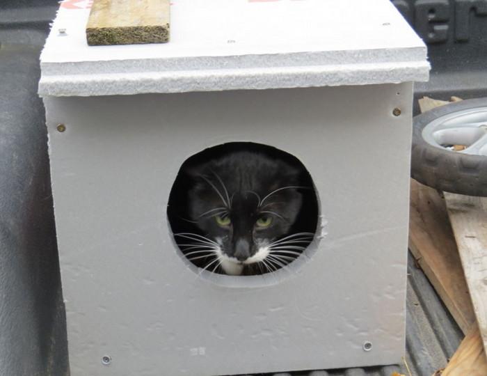 домик из пнопласта для кота