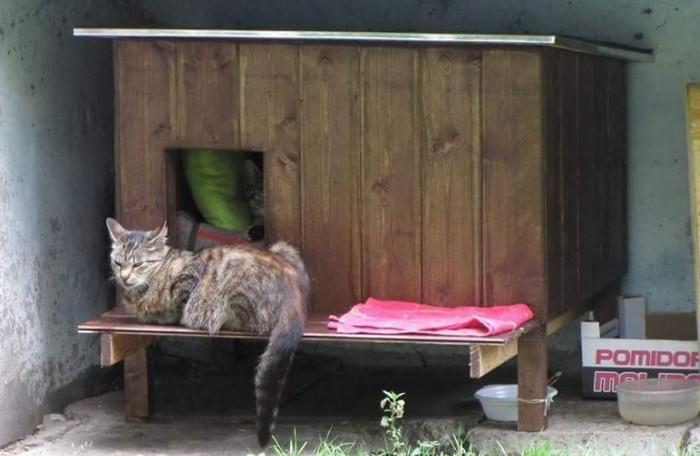 домик для котов уличный зимний